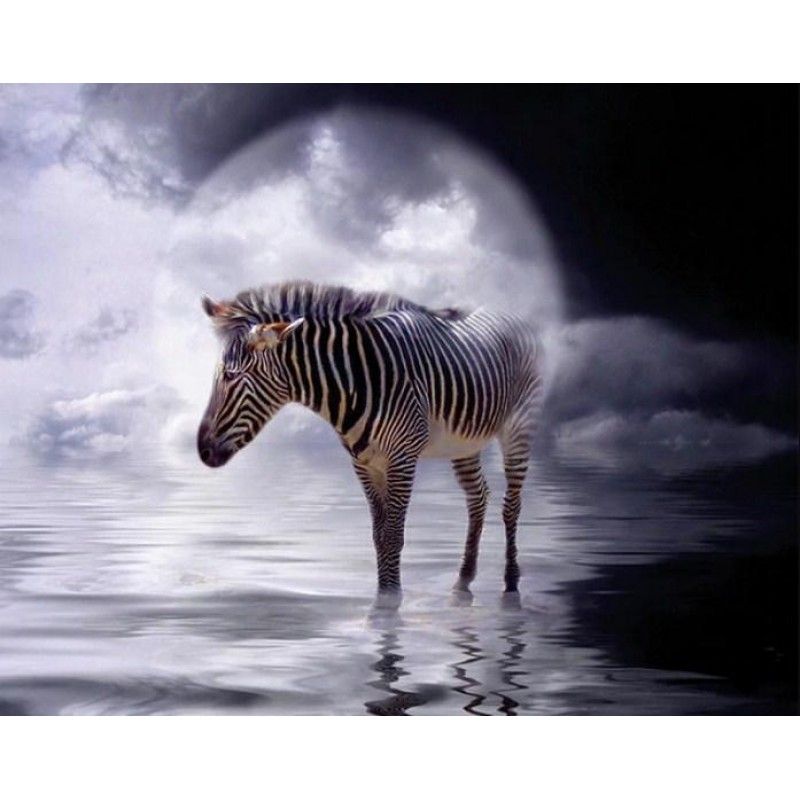 Zebra Standing in th...