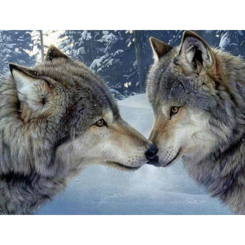 Wolves Pair in Snow