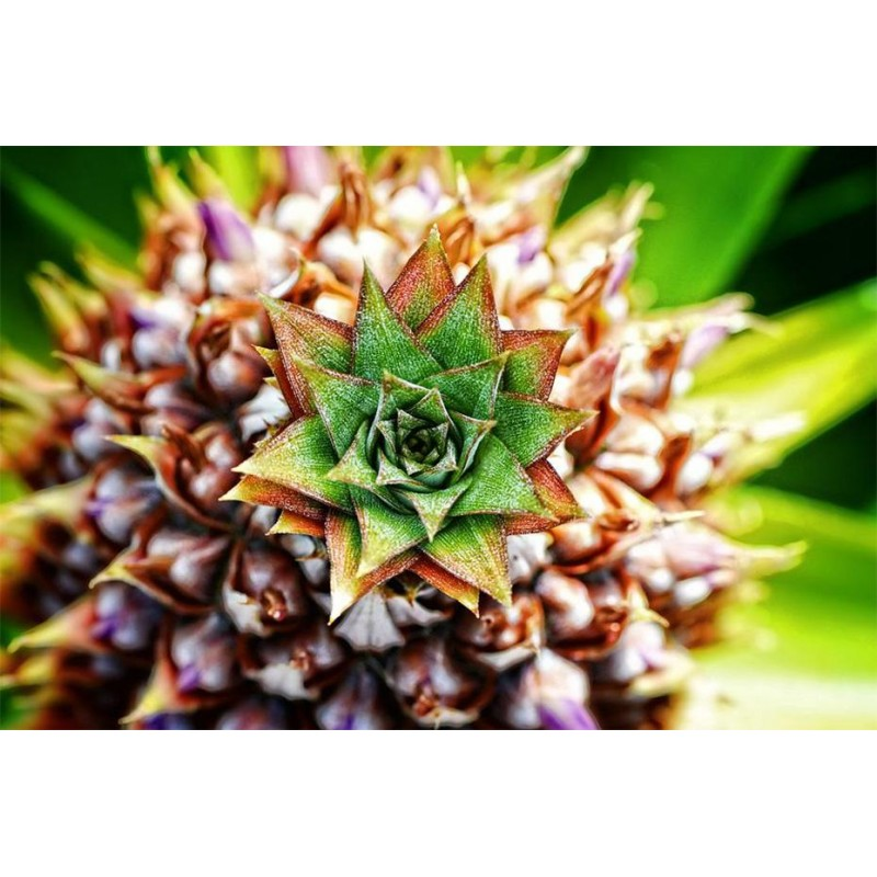 Tropical Pineapple A...