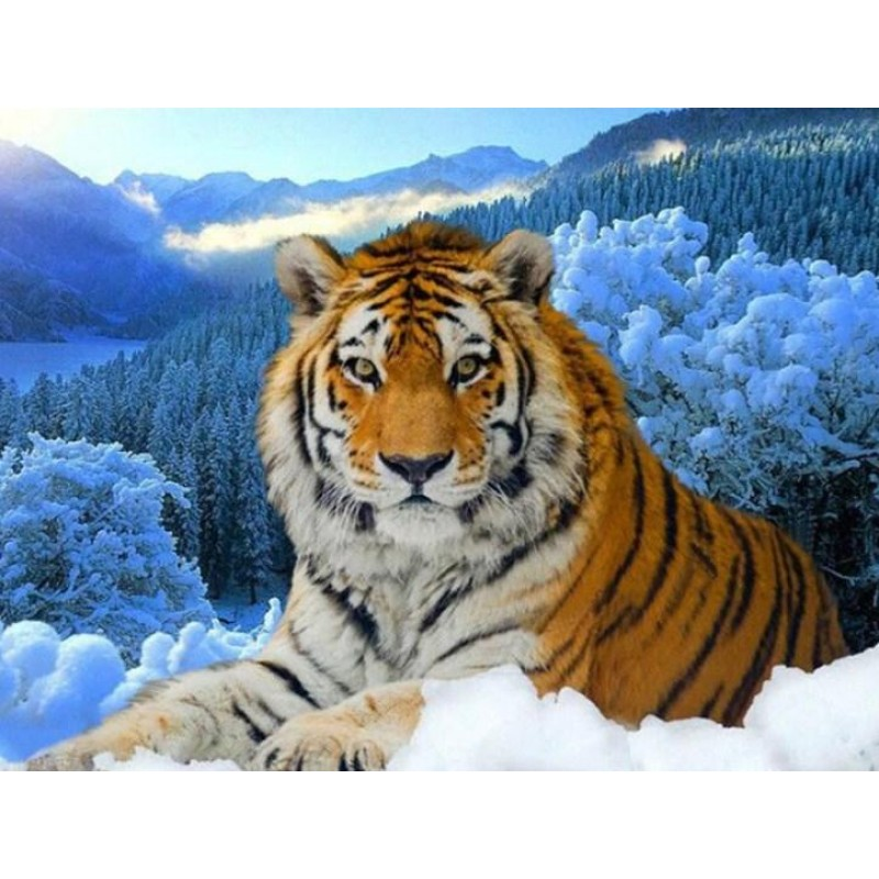 Tiger in the Snow Pa...