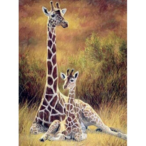 Giraffe & Baby Sitting in the Forest
