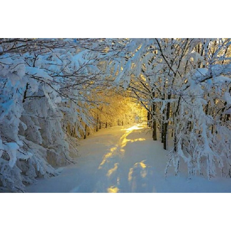 Sunshine in the Snow...