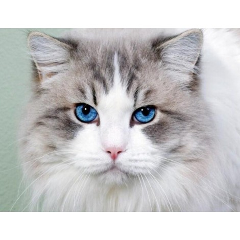 Stunning Cat with Blue Eyes