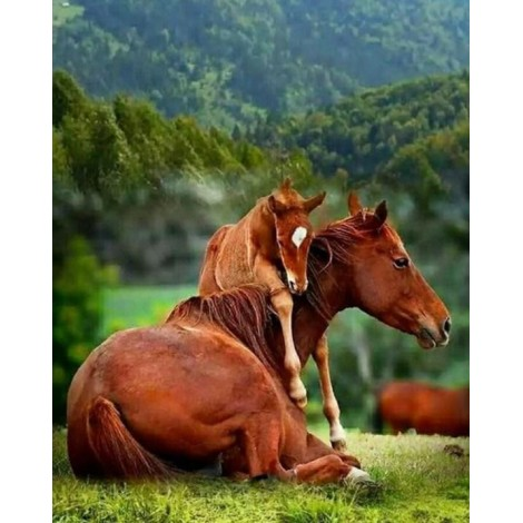 Horse Baby Hugging the Mother