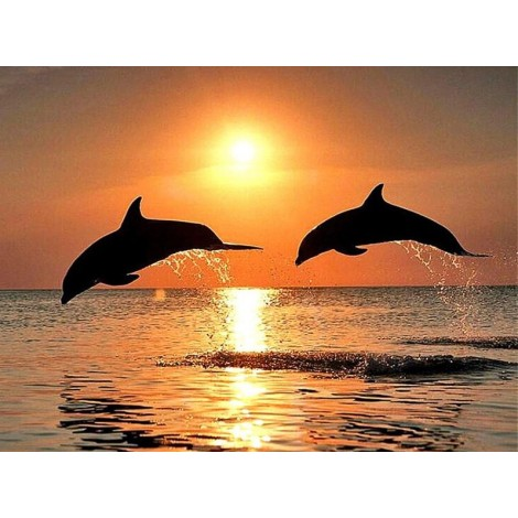 Sea Dolphins & Sunset View
