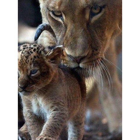 Mother & Baby Lion Diamond Painting