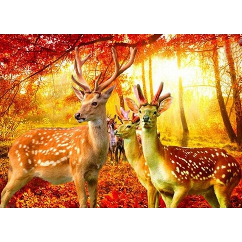 Red Autumn Forest & ...
