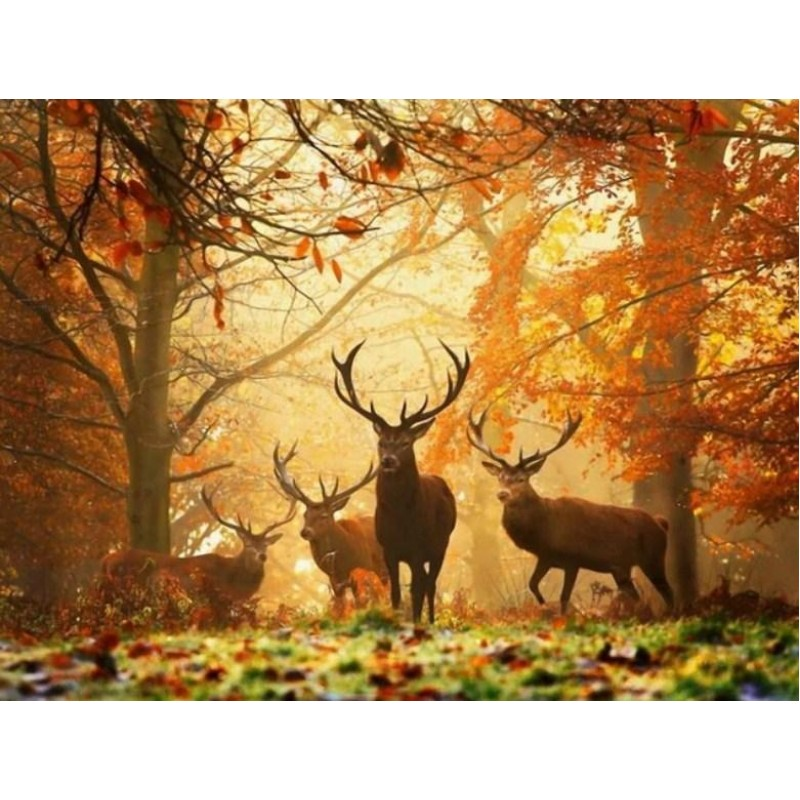Elks in Autumn Fores...