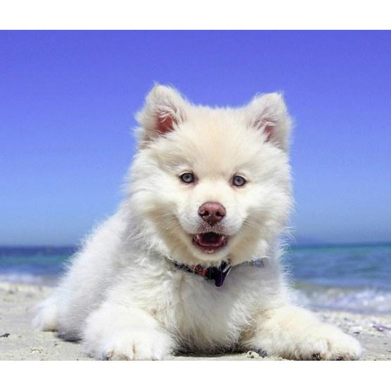 Adorable Puppy on th...