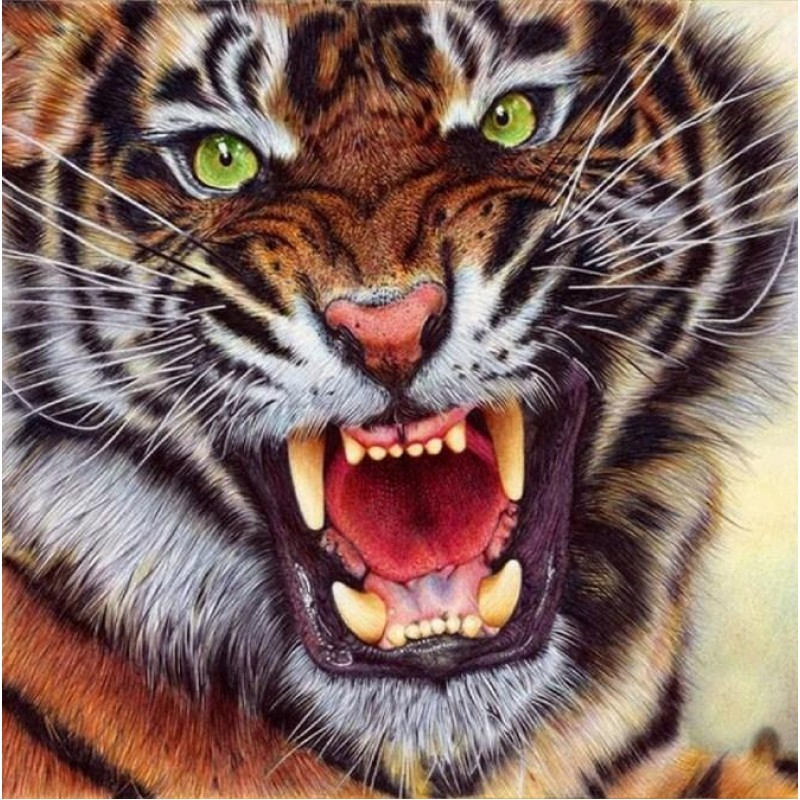 Angry Tiger - Paint ...
