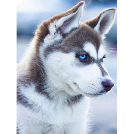 Adorable Husky with Blue Eyes