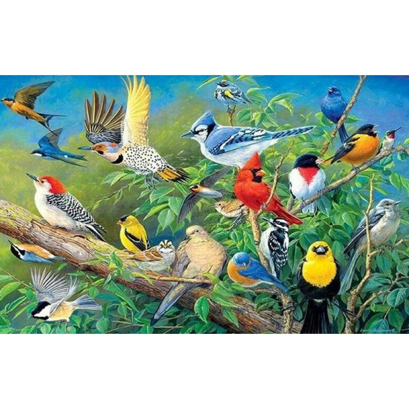 Collection of Birds ...