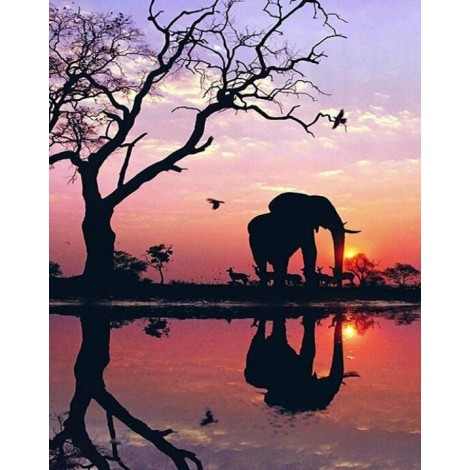 African Elephant & Sunset View