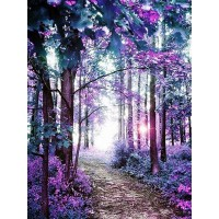 A Forest Pathway